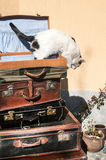 Old leather suitcases and cat Royalty Free Stock Photo