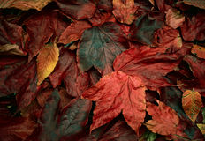 Old leaves background Stock Photography