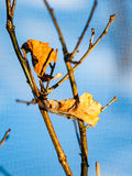 Old leaves  Stock Photo