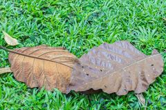 The old leaves. Royalty Free Stock Image