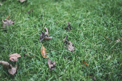 Old leaves on green grass Stock Images