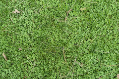 Old leaves on green grass Royalty Free Stock Photos
