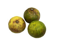 Old lemon aged 3 weeks stored in the refrigerator. Isolate for 4 view of lime or lemon. Royalty Free Stock Photo