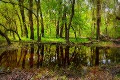 Free Old Letea Forest , Romania Stock Photos - 98457783