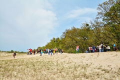 Old Letea Forest and sand dunes, Romania Stock Photography