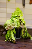 Old lettuce Stock Photography