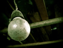 Old light bulb. Old and dirty light bulb Royalty Free Stock Photography