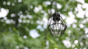 Old light bulb with branches of tree stock video footage