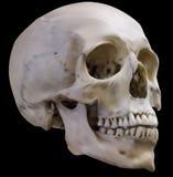 Old light grey human skull on black illustration Stock Image