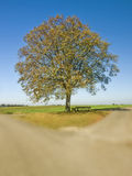 Old lime tree at a crossroad. With blue sky stock photography