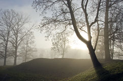 Old lime tree valley sunken in dense fog. Royalty Free Stock Photos