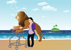 Old lion. Walking on a tropical island with a nanny and a treadmill Stock Image