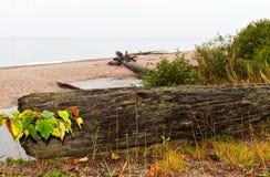 Old log on the beach Royalty Free Stock Photos