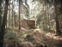 Old log cabin hidden in the woods royalty free stock image