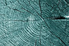 Old log cut macro in cyan tone. Abstract background and texture for design stock photo
