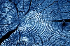 Old log cut macro in navy blue tone. Abstract background and texture for design royalty free stock photography
