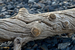 Old log ejected  on the sea shore. Stock Photography