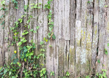 Old log fence with the ivy. Old log fence with the ivy of the countryside village in Thailand Royalty Free Stock Photography