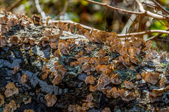 Old Log with Fungus Stock Photography