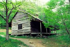Old log house with dogwood blooms Stock Photos