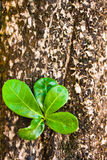 Old log with new shoot and fresh green leaves, Stock Image