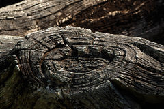 Old log. The texture of old log stock image
