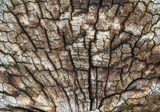 Old Log Texture Stock Photos