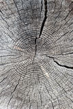 Old log with tree-ring Stock Photo