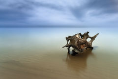Old log in the water Royalty Free Stock Photography