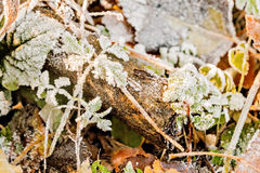 Old log in the woods covered with frost Royalty Free Stock Images