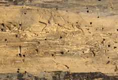 Old log with woodworm holes Royalty Free Stock Photos