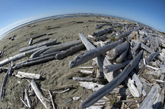 Old logs on the beach Stock Images