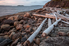 Old logs beached sea. With stones royalty free stock photos