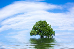 Old lone oak tree Stock Image
