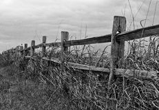 An old lonely fence. An old wooden fence sitting in a bed of tall grass Royalty Free Stock Image