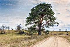 Old lonely pine near a countryside road. The image was taken at the early spring in vicinity of Cesis city, Latvia Stock Image