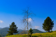 Old and lonely tree Stock Photography