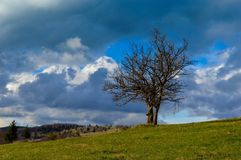 Old lonely tree Royalty Free Stock Photo