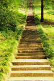 Old long stone mossy staircase in green forest Stock Photos
