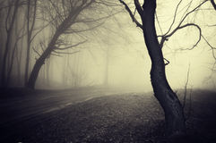 Old looking photo of a path through a forest with. A path trough a foggy forest Royalty Free Stock Photography