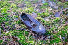 Old lost single shoe in the pine forest.  Stock Image