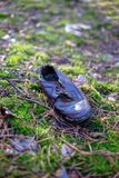 Old lost single shoe in the pine forest.  Royalty Free Stock Photography