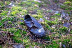 Old lost single shoe in the pine forest.  Stock Photo