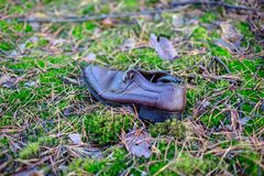 Old lost single shoe in the pine forest.  Stock Photos