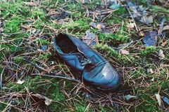 Old lost single shoe in the pine forest.  Royalty Free Stock Image