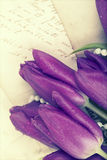 Old love letters and purple tulips Stock Image