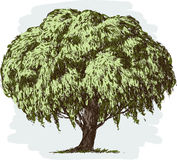 Old lush tree Stock Image