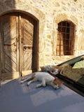Old Malia. Old town of Malia, Crete, Greece royalty free stock photos