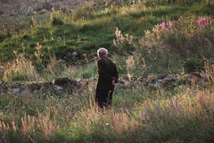 Old man in Alpine meadows Stock Image