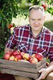 Old man with Apple in the Apple Orchard. Old man with Apple in the Orchard. Grandfather with Organic Apple in the garden. Harvest Concept. Garden, fruits at fall Stock Image